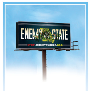 You can find stop-honeysuckle.org billboards on I-70 between St. Louis and Columbia on the north side facing east near the Danville exit, and on the north side of Highway 100 facing west just outside of Washington.